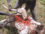 Cannibal Holocaust... Ch27_small